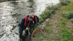 Environment-Agency-Christmas-Tree-river-protection-575