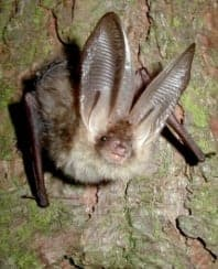 BCT bat photo