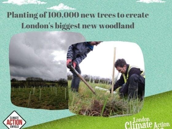 LCAW woodland planting